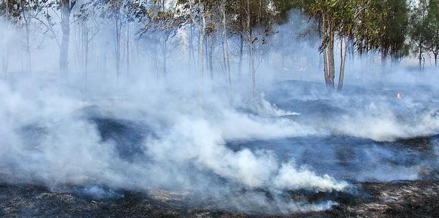 Un incendio es un ataque para los ecosistemas y la biodiversidad. Autor: Bushfire