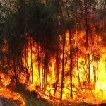 Las víctimas de los incendios forestales