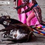 Hasta 70.000 toros mueren cada año en las diferentes fiestas taurinas