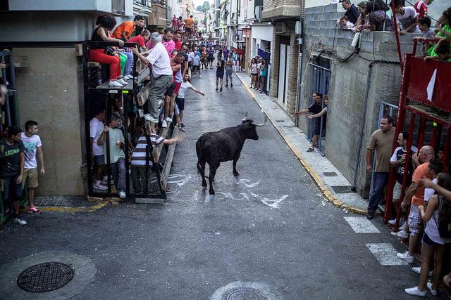 Bous al carrer. Foto: Ajuntament De Vilamarxant