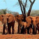 La tercera actividad delictiva del mundo, el tráfico de especies exóticas
