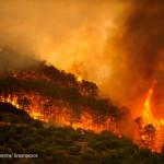 Datos claves  sobre  los incendios forestales en España